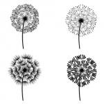 4 dessins de dandelions femme a tatouer