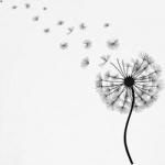 modele pour tatouage fleur pissenlit